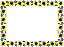 Sunflower pattern in a frame Royalty Free Stock Photography