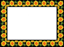 Sunflower pattern in a frame Stock Photo