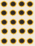 Sunflower pattern. Yellow and green sunflower  on the beige background Royalty Free Stock Image