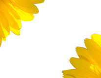 Sunflower petals the background Stock Photos