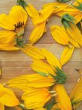 Sunflower petals background Royalty Free Stock Photo