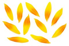 Free Sunflower Petals Isolated On White Background Royalty Free Stock Image - 175327646