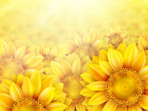 Sunflower petals with summer sun. EPS 10 Royalty Free Stock Image