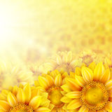 Sunflower petals with summer sun. EPS 10 Stock Image