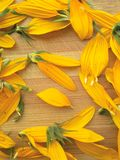 Sunflower petals on wooden background Royalty Free Stock Photo