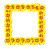Sunflower photo frame Stock Images