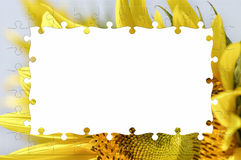 Sunflower photo frame Royalty Free Stock Photography