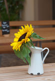 Sunflower in pitcher on the table. Royalty Free Stock Photography