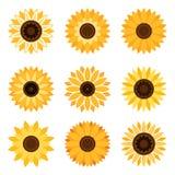 Sunflower emblem set. Sunflower plant icons isolated on white background. Vector flat beautiful sunflowers Stock Photos