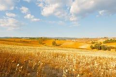 Sunflower Plantation Stock Image