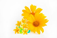 Sunflower and Plumeria Royalty Free Stock Image