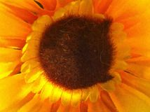 Sunflower. Pollen yellow petal nature Royalty Free Stock Photos
