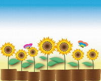 Sunflower pot Stock Images