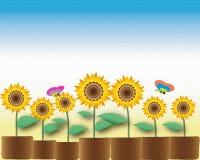 Sunflower pot Stock Images