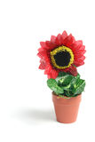Sunflower Pot Plant Stock Photos