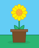 Sunflower Pot. Yellow sunflower in pot outside stock illustration