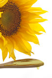 Sunflower with pouring oil Stock Image