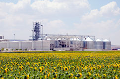 Sunflower processing Facility Royalty Free Stock Image