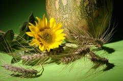 sunflower and pumpkin stock photo