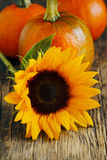 Sunflower and pumpkins Royalty Free Stock Image