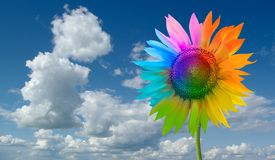 Sunflower - a rainbow. Color sunflower against the sky Stock Images