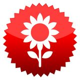 Sunflower, Red sun sign Royalty Free Stock Images
