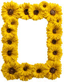Sunflower Resin Frame Stock Photography