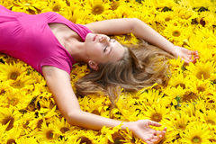 Sunflower rest Royalty Free Stock Photo