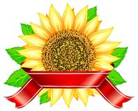 Sunflower & ribbon Royalty Free Stock Photography