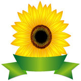 Sunflower with ribbon. Sunflower with ribbon, illustration on a white background Stock Image