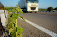 Sunflower on the road and a truck (delivery of goods, freight tr Stock Photos