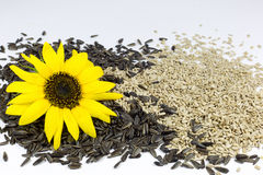 Sunflower and Roasted Sunflower Seeds on White Stock Photo