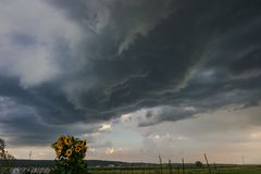 Sunflower with rotating thunderstorm in Transylvania, Romania royalty free stock image