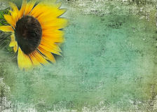 Sunflower Rugged Background Stock Photos