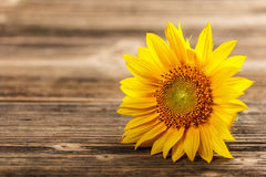 Rustic Background With A Sunflower And Wheat Stock Image