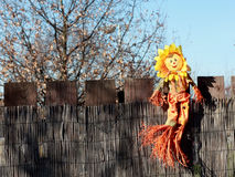 Sunflower scarecrow Royalty Free Stock Photos
