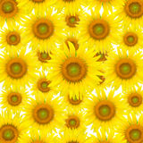 Sunflower seamless Royalty Free Stock Photography
