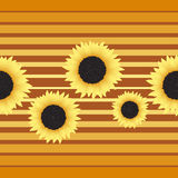 Sunflower seamless background Stock Image