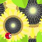 Sunflower seamless background Stock Photos