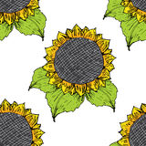 Sunflower seamless pattern hand drawn sketch, background, typography design vector illustration Royalty Free Stock Images