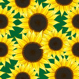 Sunflower seamless pattern Stock Photo