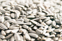Sunflower Seed. Closeup view of sunflower seeds Royalty Free Stock Photos