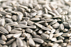 Sunflower Seed. Closeup view of sunflower seeds Royalty Free Stock Images