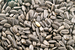 Sunflower Seed. Closeup view of sunflower seeds Stock Photo