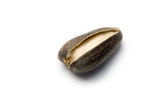 Free Sunflower Seed Royalty Free Stock Image - 16979986