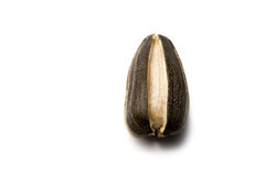 Sunflower seed Royalty Free Stock Photo