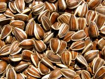 Sunflower seed. Detail photo texture of the sunflower seed background Stock Image