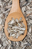 Sunflower seed Stock Image