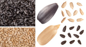 Sunflower seed. Sunflower background and seed isolated on white Royalty Free Stock Image