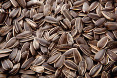 Sunflower Seed. For make background Royalty Free Stock Photos